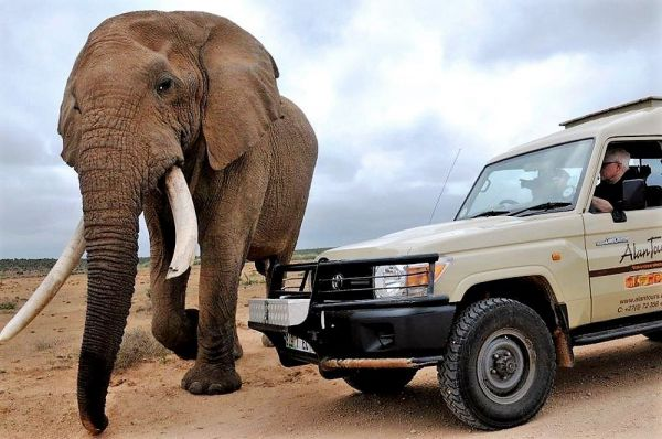 Huge bull Elephant passes the Alan tours 4x4 safari vehicle within touching distance
