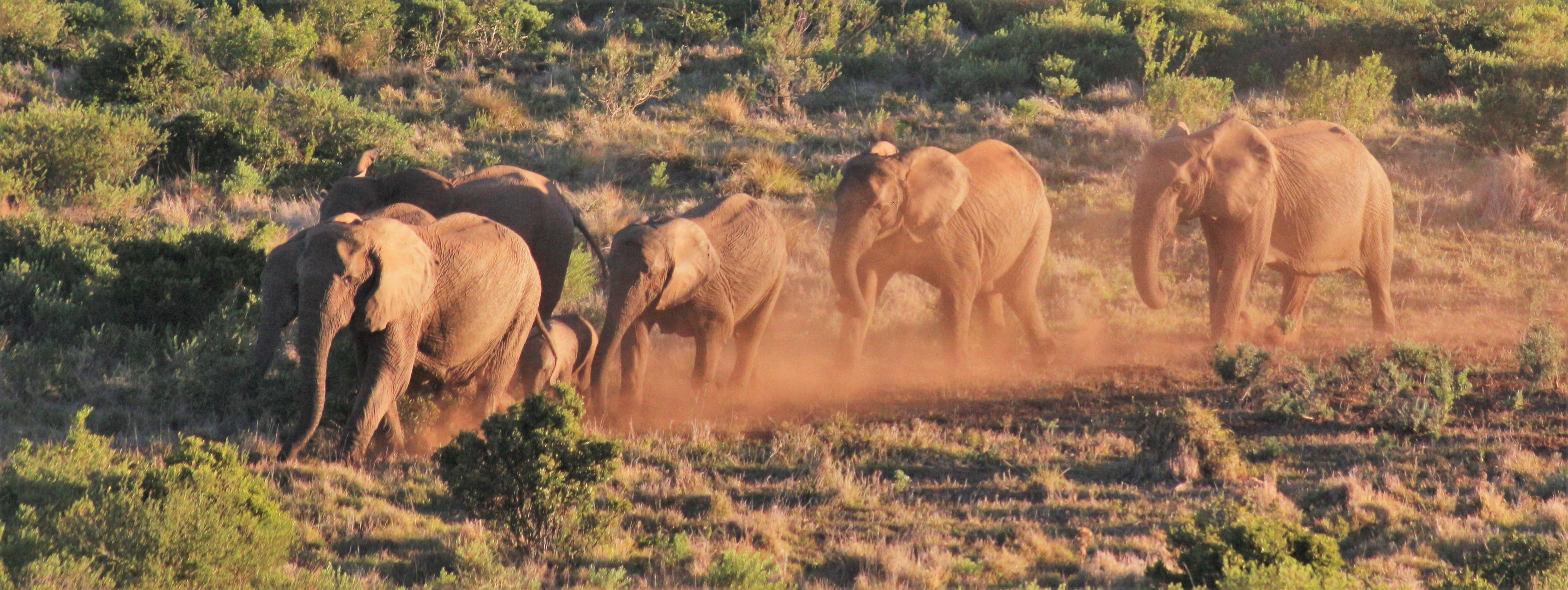 Elephants viewed on a Tour of the Addo National Elephant Park